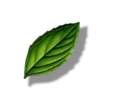 Leaf icon, marks plants that are non-woody, and vulnerable to invasion. From Fire and Flora v12.